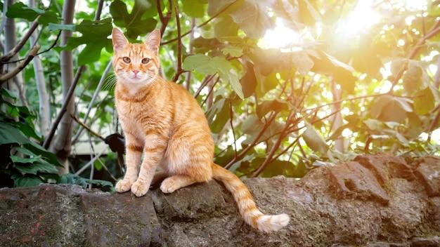 Милый рыжий кот сидит на камне и смотрит в камеру