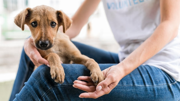 Милая собака-спасатель в приюте, которую держит женщина