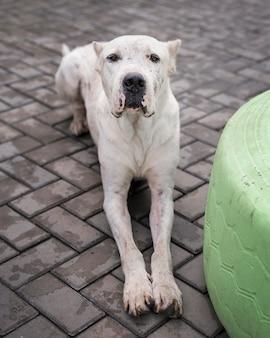 Simpatico cane da salvataggio in posa al rifugio in attesa di essere adottato