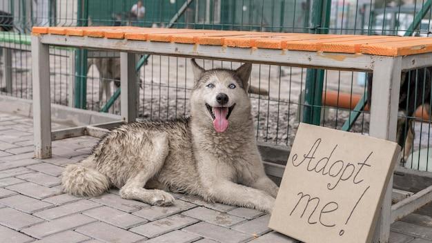 Simpatico cane da salvataggio seduto accanto a adottarmi segno