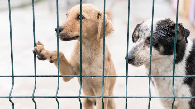 フェンスの後ろの養子縁組シェルターでかわいい救助犬