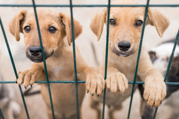 Симпатичные собаки-спасатели в приюте для усыновлений, позирующие за забором
