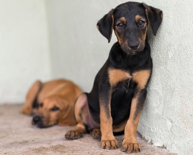 養子縁組を待っている避難所でかわいい救助犬