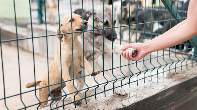 Симпатичные собаки-спасатели здороваются с человеком, пришедшим к ним в приют