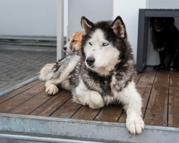 Simpatici cani da salvataggio al rifugio in attesa di essere adottati