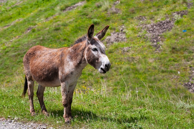 A cute, sad, lonely donkey is walking along the road.