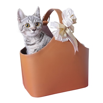 A cute scottish  breed cat sitting in a brown leather basket. she is looking directly at the camera