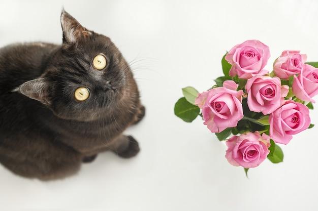 Милый шотландский кот сидит возле вазы с розами и смотрит