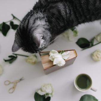 Симпатичная шотландская прямая кошка, книга, чашка чая и цветы на столе. смешная кошка, пахнущая цветами дома.