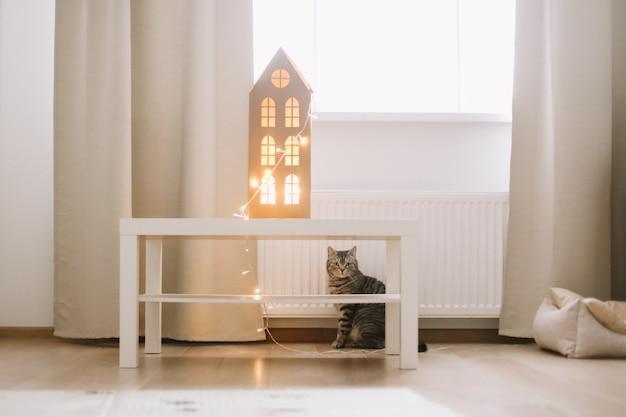 居心地の良い明るい部屋でかわいいスコットランドのストレート猫