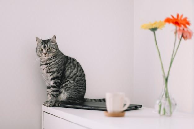 花と屋内でかわいいスコットランドのまっすぐな猫