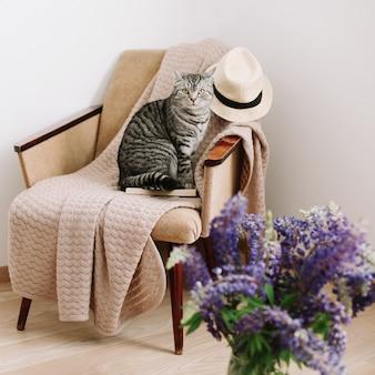 Милый шотландский прямоухий кот сидит в кресле дома