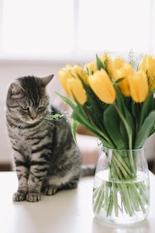 Милый шотландский прямоухий кот с цветами в помещении