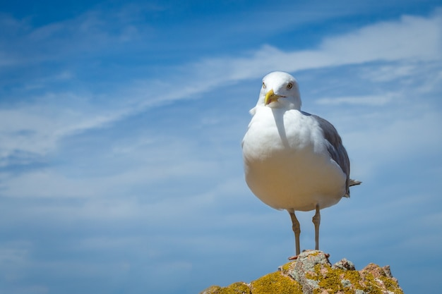 Cute seagull perched on a hill with the beautiful cloudy sky