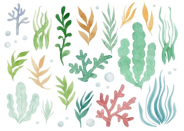 만화 수중 바다 해초 산호의 귀여운 세트