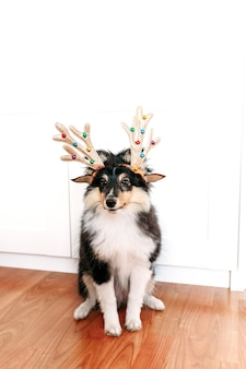 Cute shelty puppy with christmas deer horns