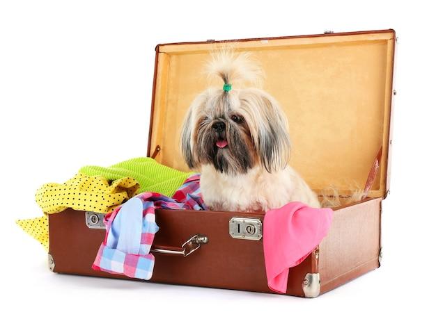 白で隔離の服とスーツケースのかわいいシー・ズー