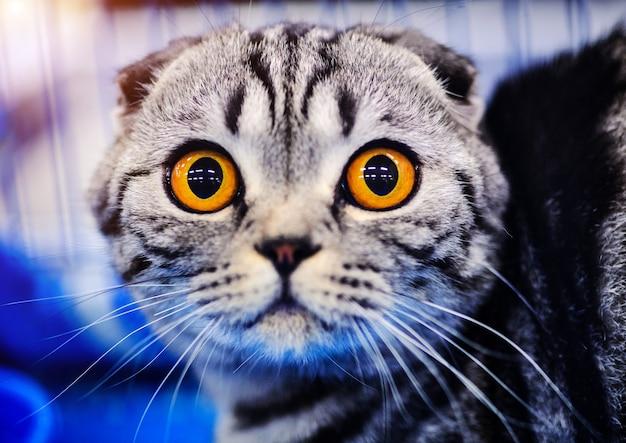 かわいいショックを受けた猫