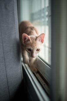 かわいい短い髪のアジアの子猫猫