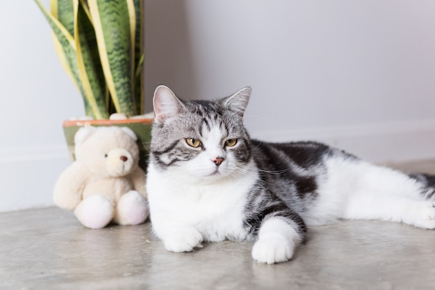 Cute short hair cat sitting on the floor