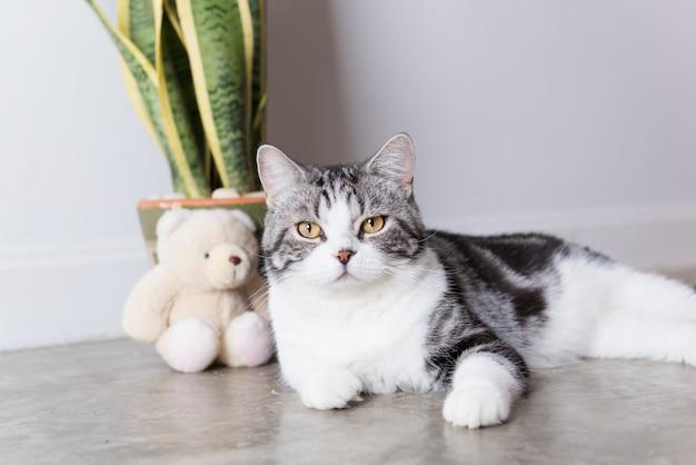 床に座ってかわいいショートヘアの猫