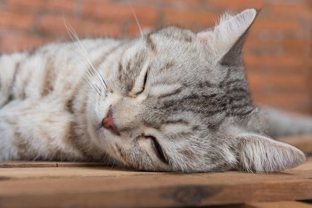 Cute short hair cat sleeping on a wooden floor