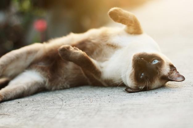 Cute siamese cat enjoy and sleep on concrete floor