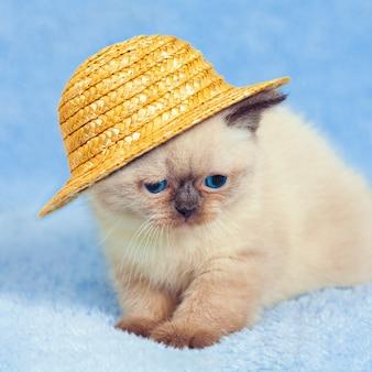 Милый сиамский котенок в соломенной шляпе