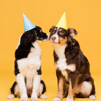 Cute sitting dogs with hats