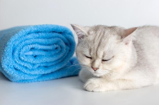 白い表面に青いタオルのロールとかわいい眠っている子猫
