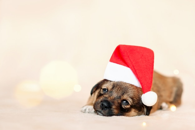Милый спящий щенок в шляпе санта-клауса
