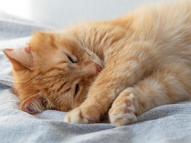 灰色の毛布の上でかわいい眠っている赤い猫。眠っているペット