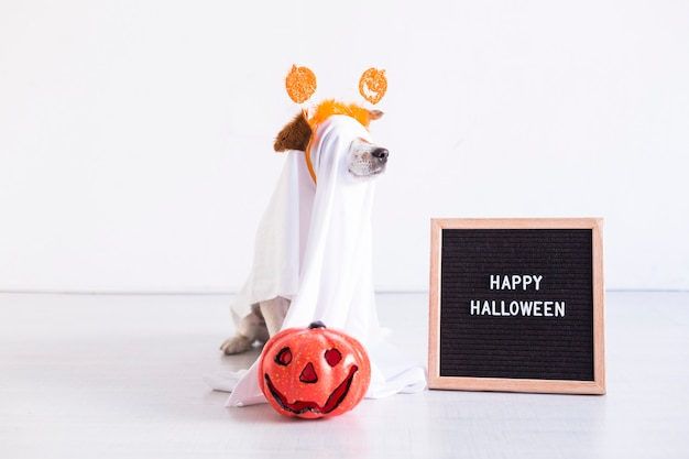 Cute small dog is wearing a ghost costume for halloween at home. pumpkin and a letter board next to him. pets indoors