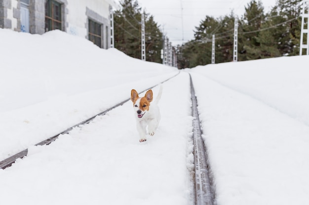 Cute small dog running in the snow in a railway station. funny ears and happy dog. winter concept. pets outdoors