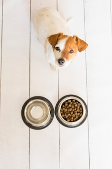 Милая маленькая собака сидит и ждет, чтобы съесть свою миску собачьей еды