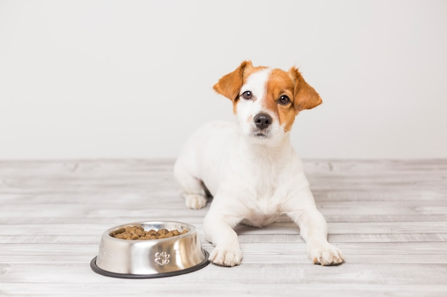 Cute small dog sitting and waiting to eat his bowl of dog food