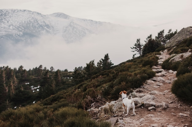 Cute small dog standing on a rock. snow mountain background. autumn or winter concept. pets outdoors. fog