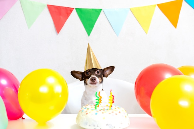 Cute small funny dog with a birthday cake and a party hat celebrating birthday