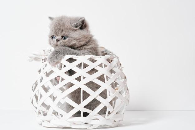 かごの中のショートヘアのかわいい小さな灰色のエキゾチックなペルシャ猫