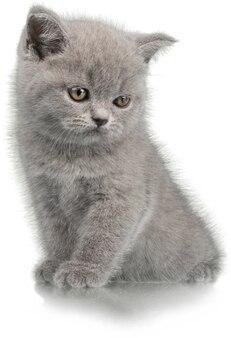 白い背景で隔離かわいい子猫