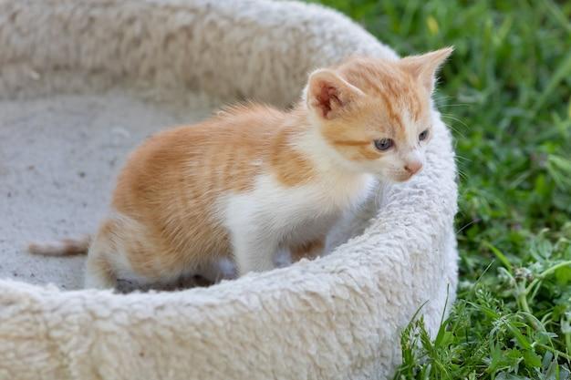 Cute small kitten looking the grass