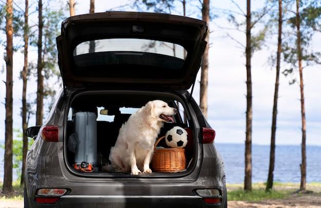 Simpatico cagnolino sorridente nel bagagliaio dell'auto