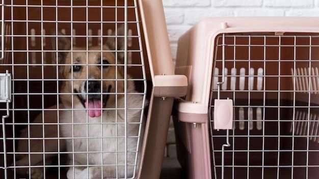 犬小屋のかわいいスマイリー犬
