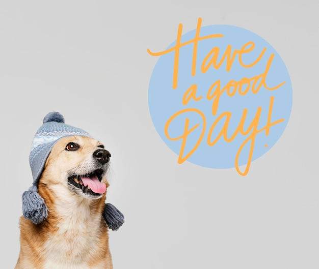 Cute smiley dog wearing knitted hat