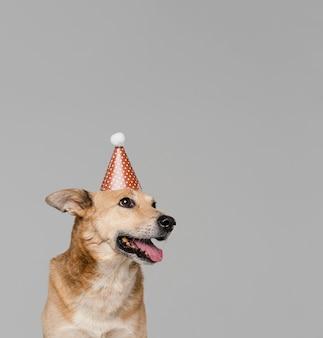パーティーハットをかぶったかわいいスマイリー犬