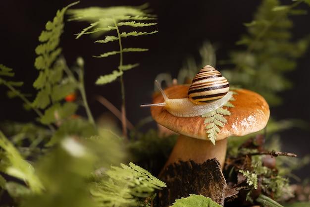 Симпатичная полосатая улитка сидит на вершине большого подберезовика, растущего через мох и опавшие листья в лесу