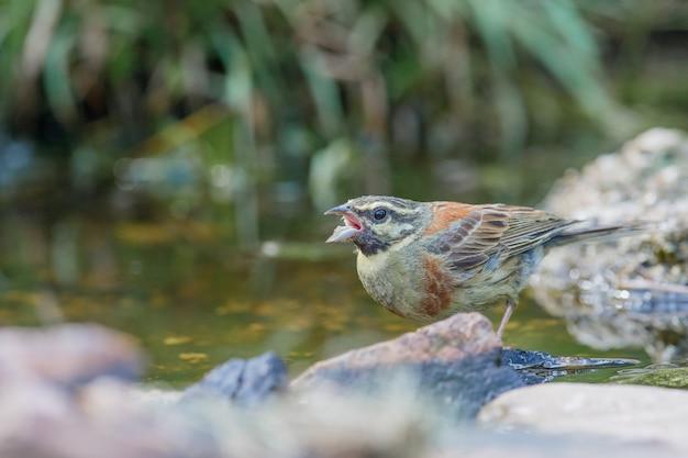 낮에 호수 옆에 자리 잡고있는 귀여운 참새