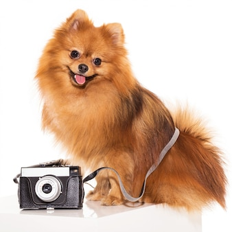Cute spitz with camera