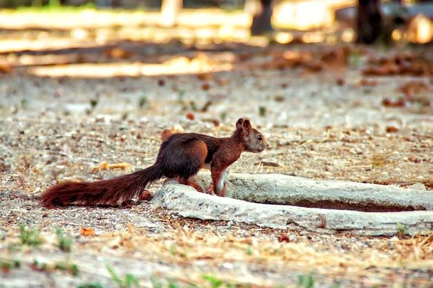 공원에서 귀여운 다람쥐