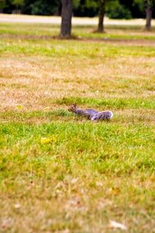 잔디밭에 귀여운 다람쥐